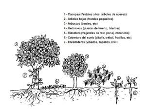 Bosque - 7 levels