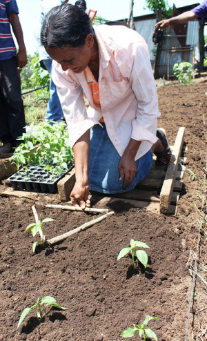 Intensive Planting 1