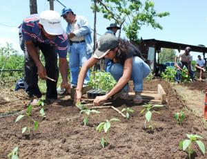 Intensive Planting 3
